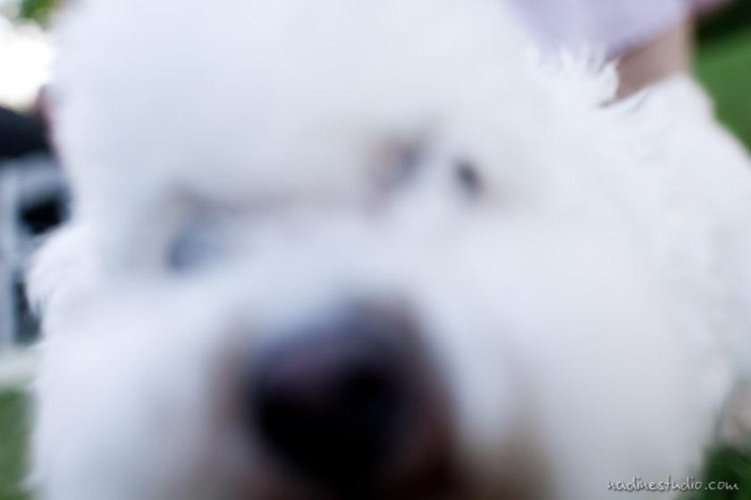 a dog!