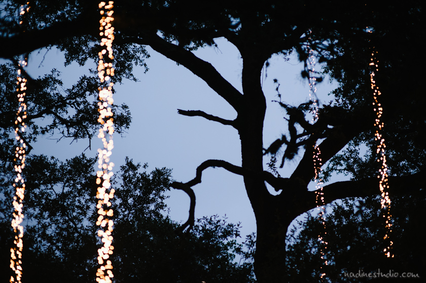 string lights in trees