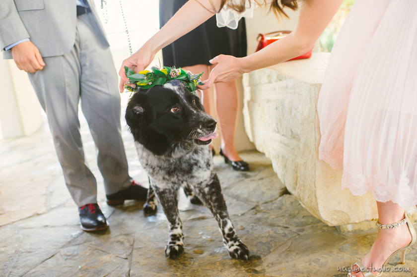 putting flower crown on the dog who is a ring bearer