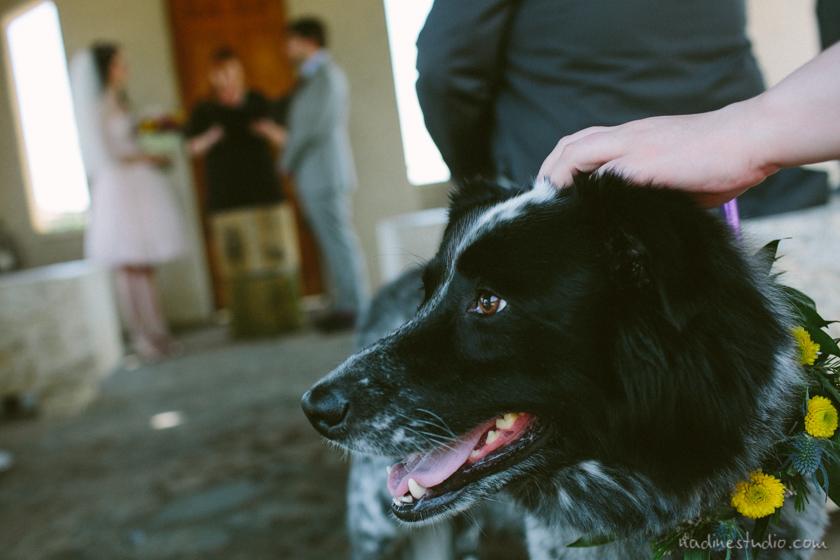 dog with garland dog ring bearer