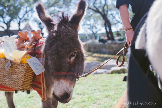 donkey carrying wedding favors