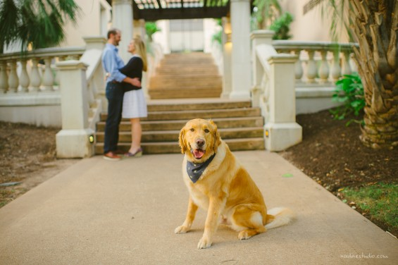 golden retriever dog engagement photographer