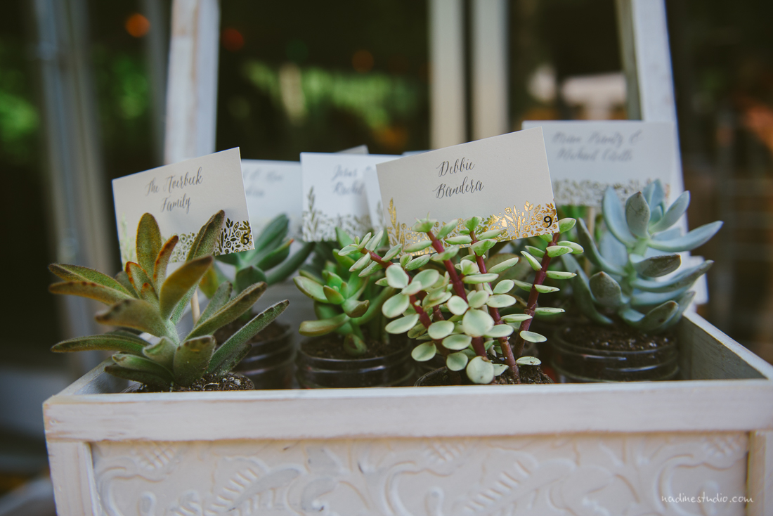 succulant table placemats