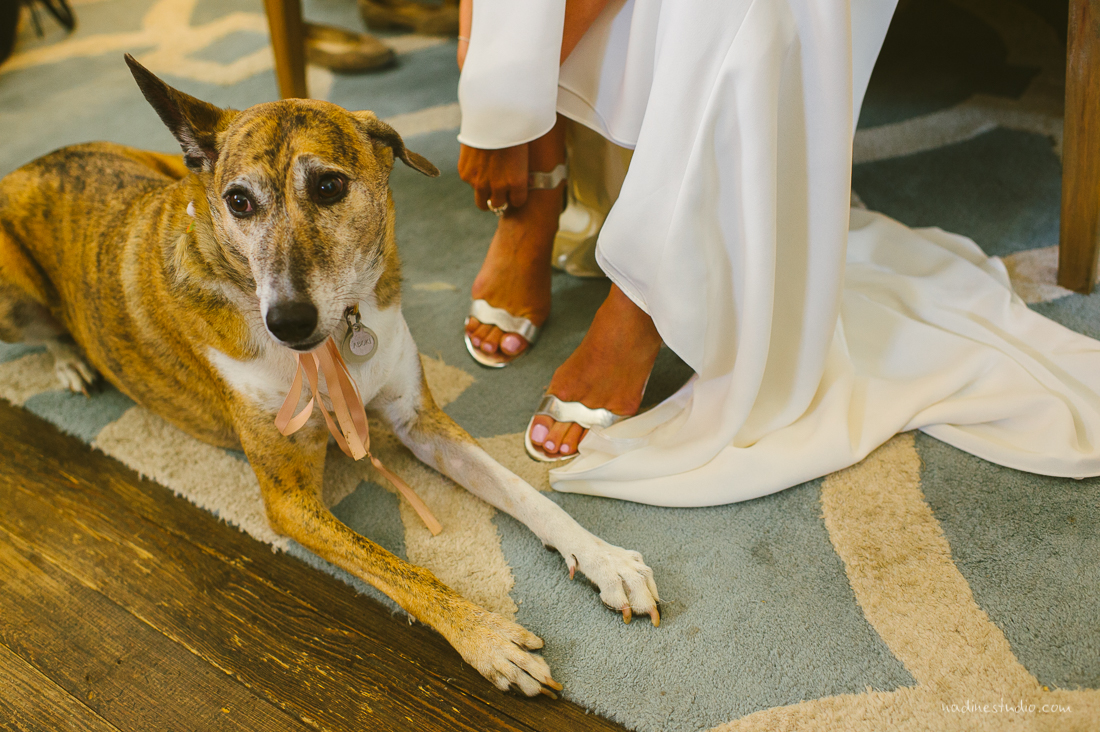 bride getting ready with puppy dog