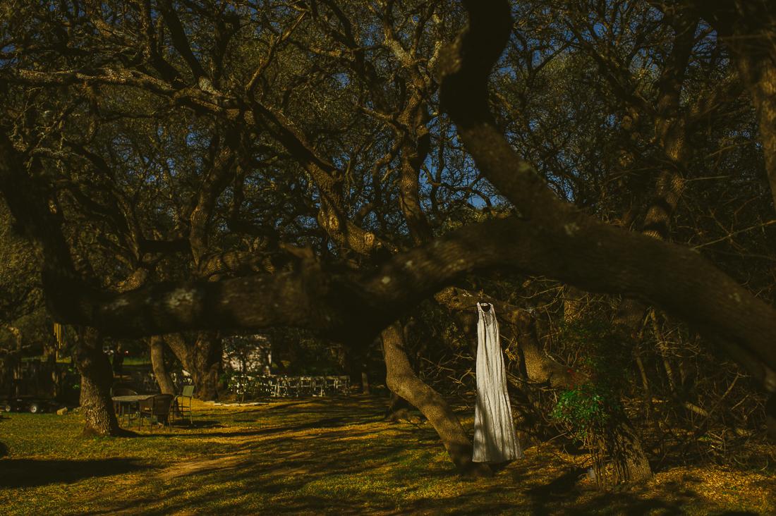 dress on a tree